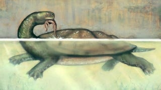 Illustration for article titled This colossal prehistoric turtle could snap other turtles in half