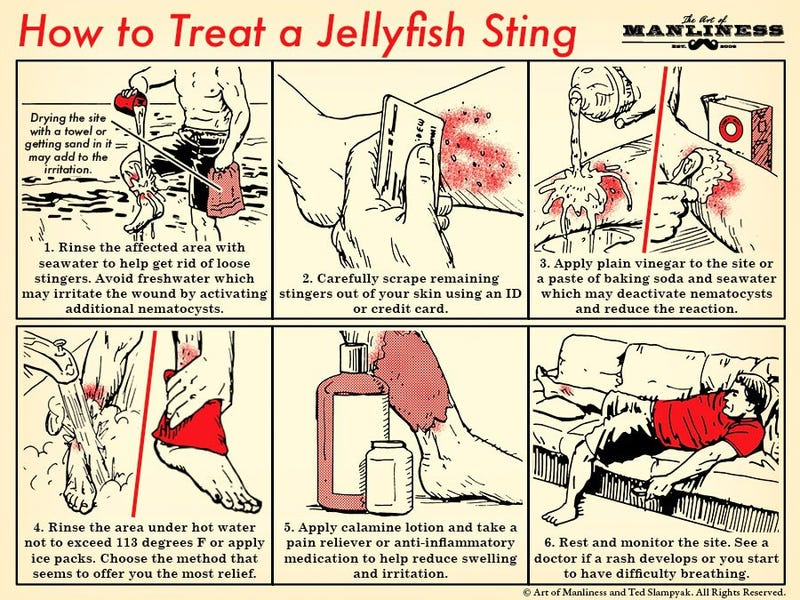 Illustration for article titled Learn How to Treat a Jellyfish Sting With This Handy Graphic