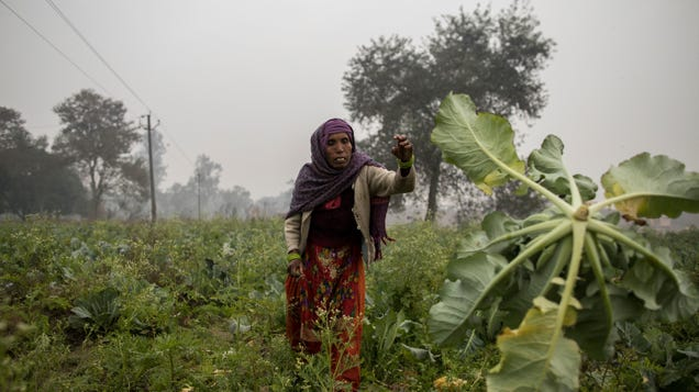 Groundwater Depletion Threatens 20% Of India s Winter Farmland