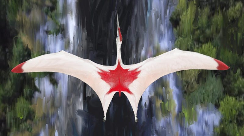 Artist's depiction of Cryodrakon boreas, featuring Canadian colours in honour of where the fossils were found. The true colours of the species aren't actually known. Illustration: Davis Maas