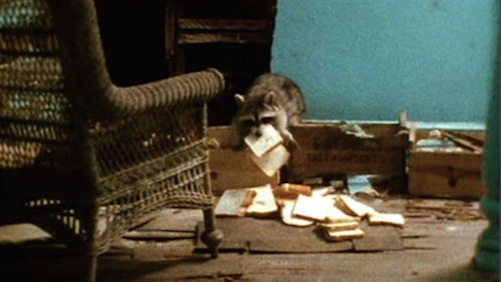 GIVE GREY GARDENS BACK TO THE RACCOONS!!!