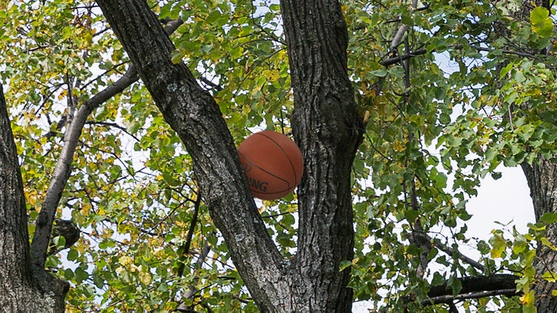 Illustration for article titled NASA Has Announced There Will Be An Ultra-Rare Spalding Eclipse Next Week Where The Sun Passes Directly Behind The Basketball Wedged In The Tree Outside This Boy's Window