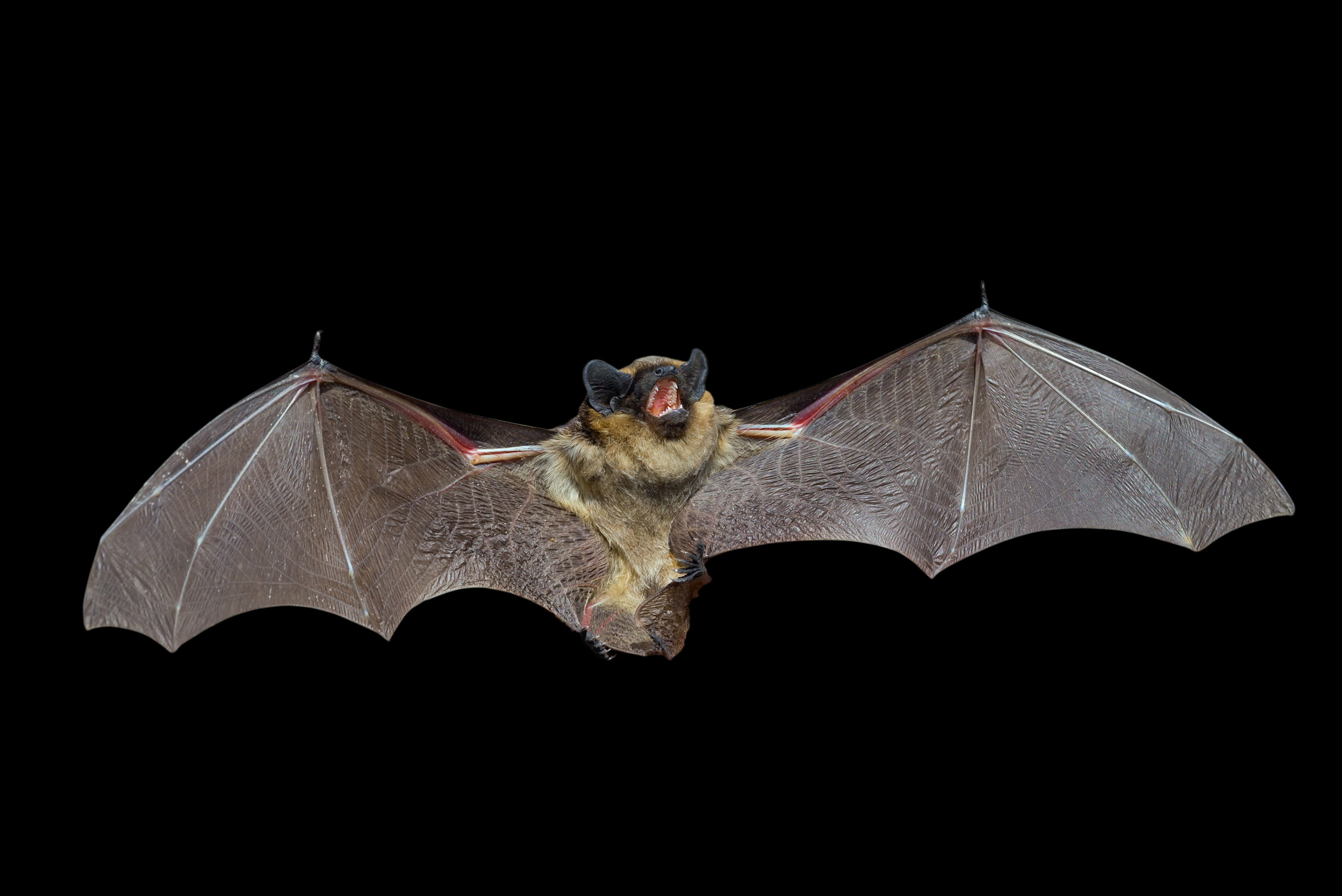 America Finally Has Its First Death By Vampire Bat
