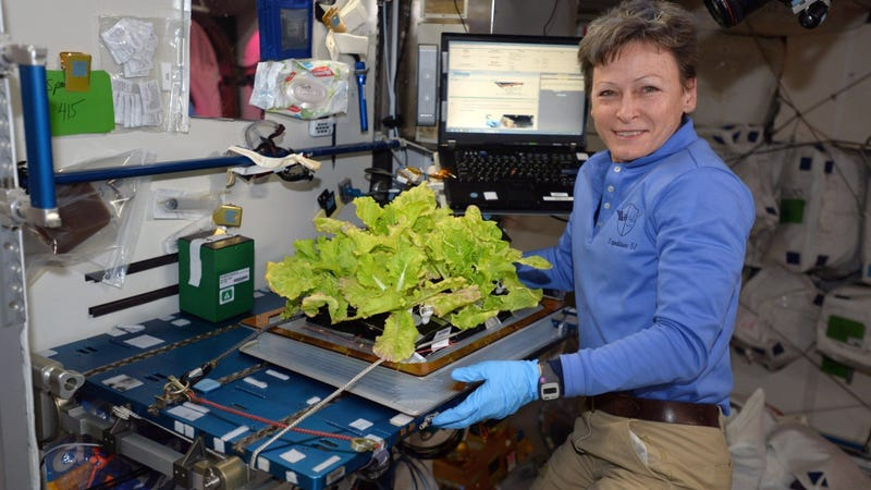 Peggy Whitson holds up Chinese cabbage grown in the International Space Station in a tweet sent on May 30, 2017. Photo: AP