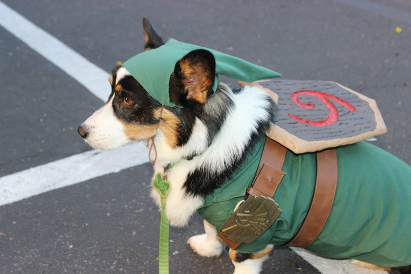Illustration for article titled Had A Rough Day? Here's A Cosplaying Corgi