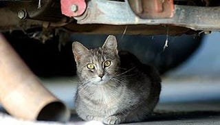 Illustration for article titled Chrysler Saves 100 Cats In Sebring Plant, Still Can't Save Self