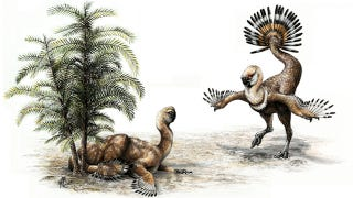 "Illustration for article titled Dinosaurs probably shook their tail feathers and ""struck a pose"" to attract mates"