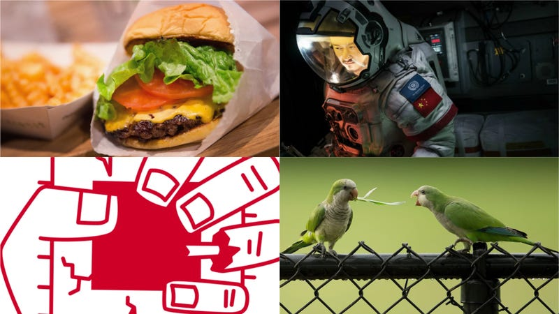 Hidden Netflix Gems, Feral Parrots, and Intel Chip Flaws: Best Gizmodo Stories of the Week