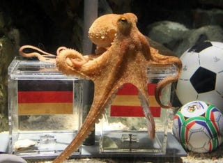 Illustration for article titled Psychic Octopus Predicts Spain, But It's A FRAUD!