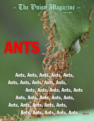Illustration for article titled Ants