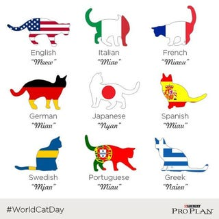 Illustration for article titled HAPPY WORLD CAT DAY