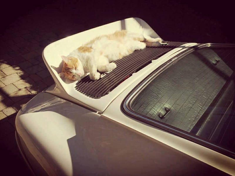 Illustration for article titled This is a cat sleeping in the sun on a 911 spoiler