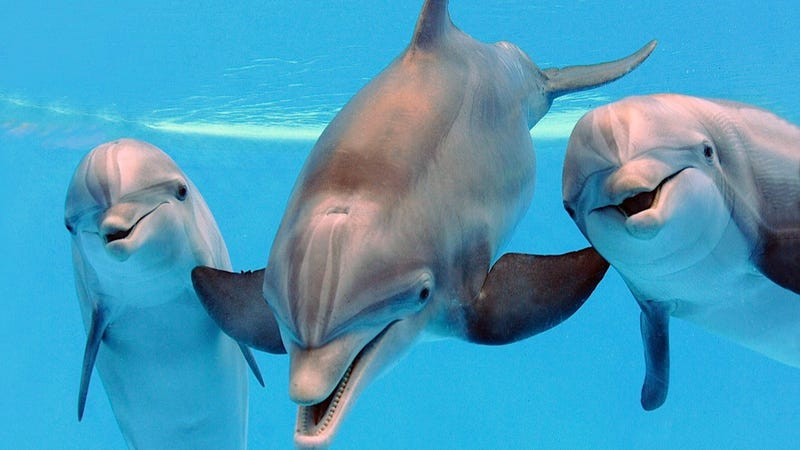 Illustration for article titled Dolphin-Assisted Births Seem Like Questionable Life Choices