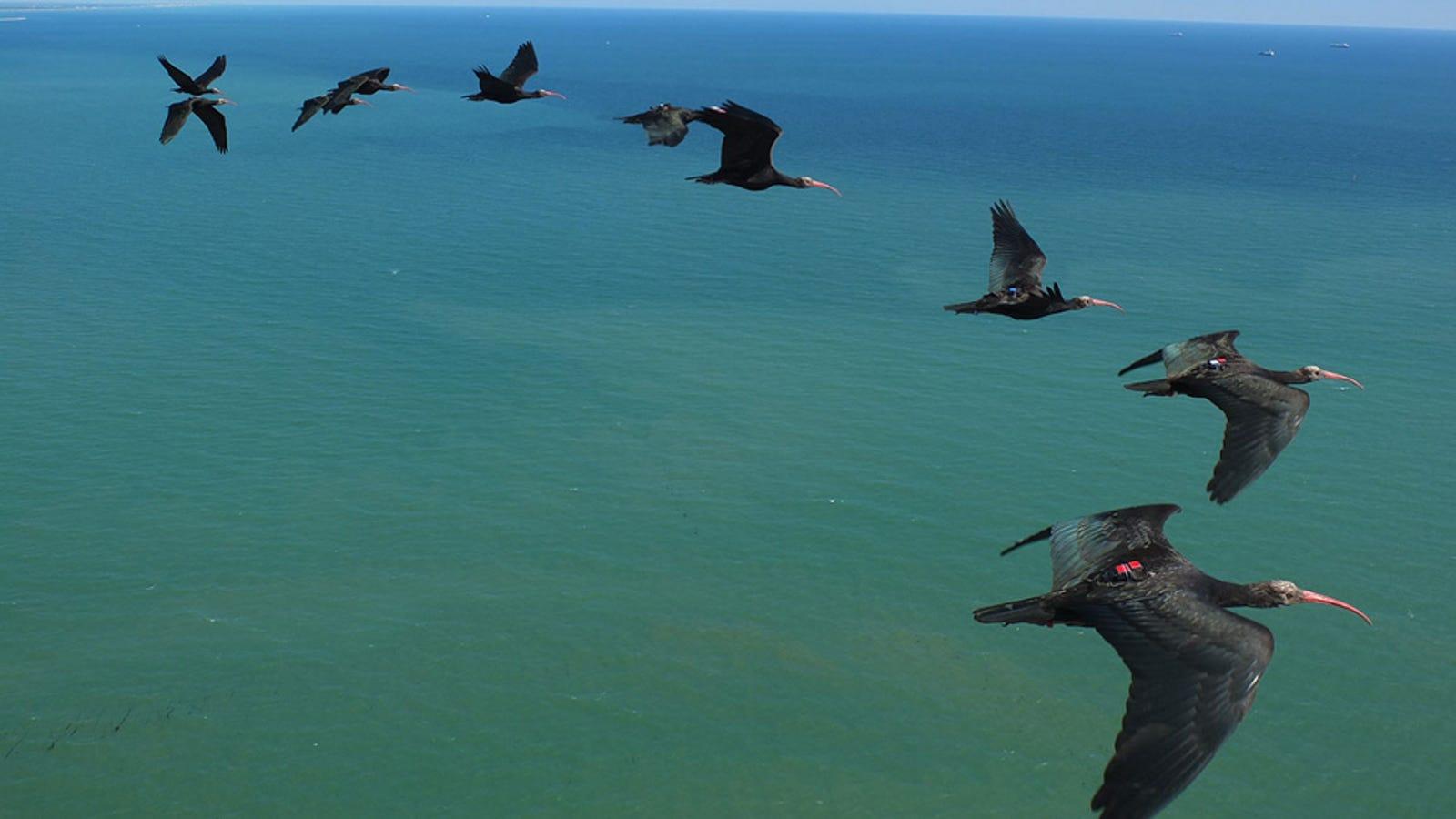 Bird Flight Patterns Magnificent Inspiration