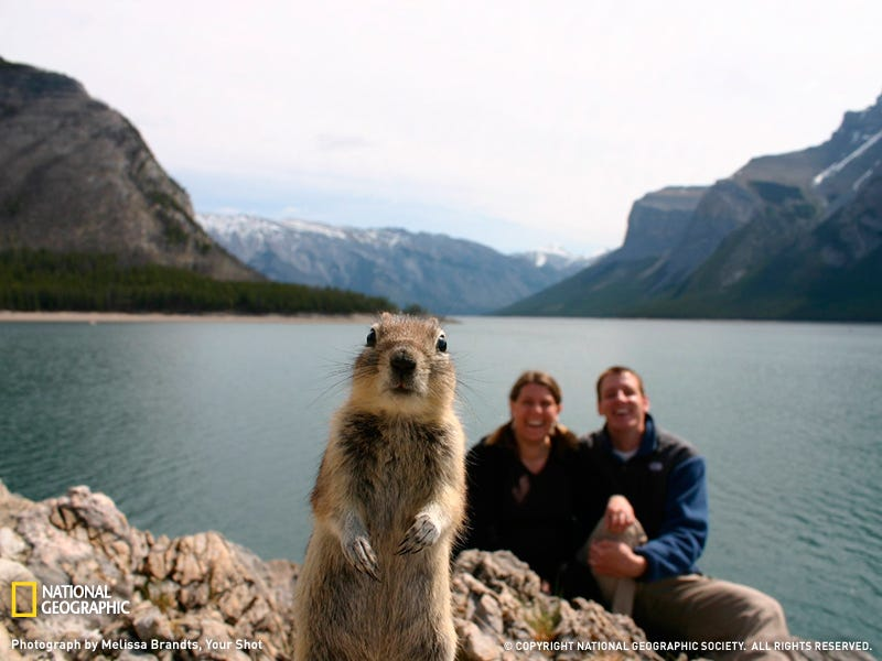 Illustration for article titled The Story of the Hilarious Photo Crasher Squirrel