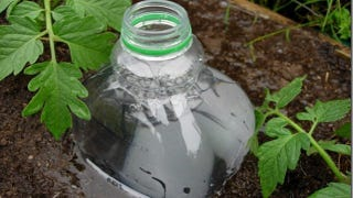 Illustration for article titled Repurpose a Soda Bottle Into a DIY Irrigation System