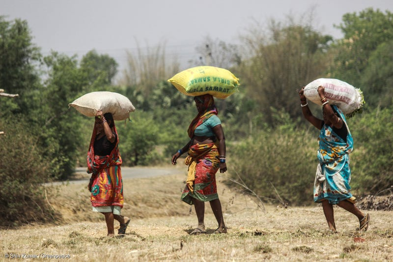 Women carrying bundles in Kedia, Indian. Undated. Photo credit: Greenpeace