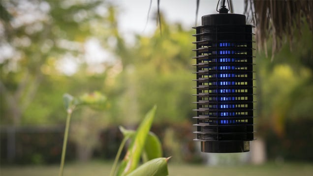 Bug Zappers Don t Actually Kill the Bugs That Are Bugging You