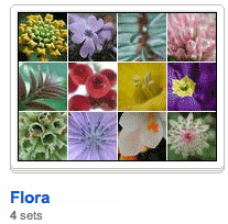 Illustration for article titled Organize your Flickr photo sets with Collections