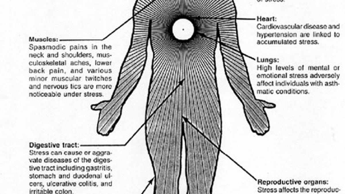 How Do Acute And Chronic Stress Impact >> What Stress Actually Does To You And What You Can Do About It