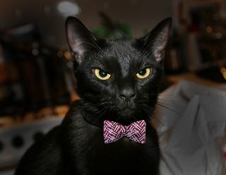 Shelters Ban Black Cat Adoption On Halloween To Prevent Animal Torture