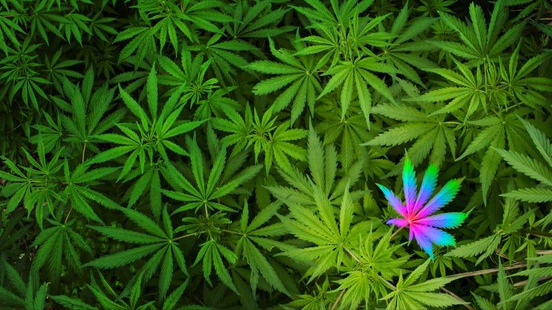 Illustration for article titled Medical Marijuana Helped Me When Nothing Else Could