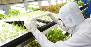 Illustration for article titled Your Lettuce Could Come From an Old Semiconductor Factory