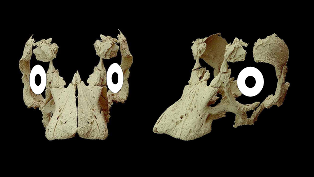 Unhatched Dinosaur Egg Reveals the Surprising Face of a Baby Sauropod