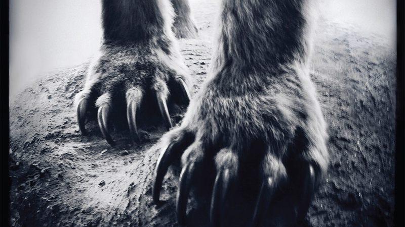 Shearwater, Animal Joy