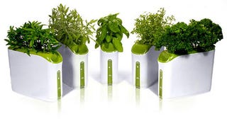 Illustration for article titled Desktop Hydroponics Are Perfect for the Corporate Jungle