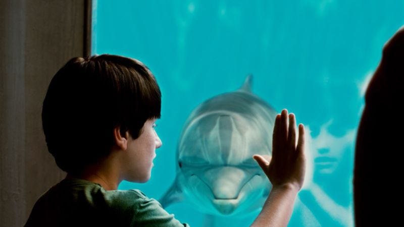 Illustration for article titled Dolphin Tale