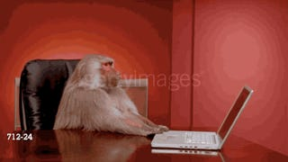 I Love These Goddamn Stock Video Baboons and So Will You