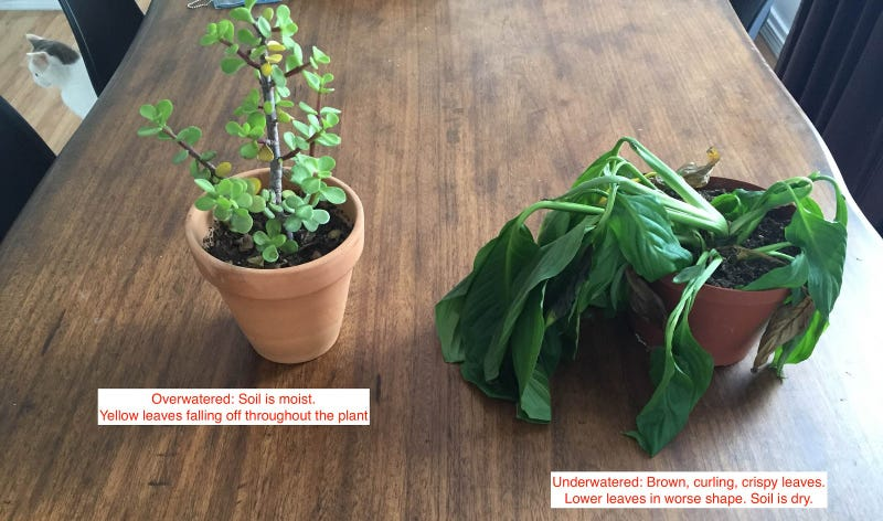 Why You Keep Killing Your Plants and What to Do About It I Killed My Houseplant on