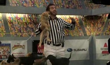 Illustration for article titled Gridiron Greats: Puppy Bowl VII Behind-The-Scenes Footage