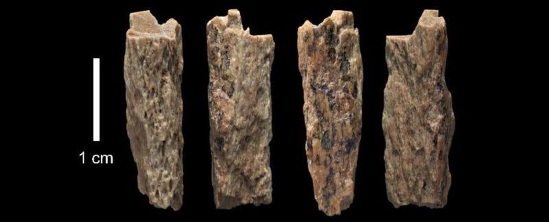 Este hueso de 50.000 años es la primera prueba directa de relaciones entre neanderthales y denisovanos
