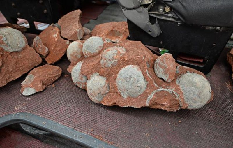 Illustration for article titled Dozens Of Dinosaur Eggs Unearthed By Chinese Road Workers
