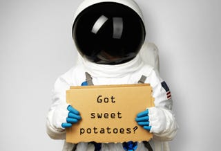 Illustration for article titled Why Sweet Potatoes Are About to Become Astronaut Superfood