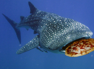 Illustration for article titled TAY: Open Forum - Pizza-Eating Whales Can Have Cabin Fever Too!
