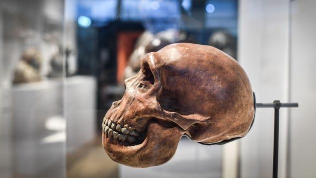 Evolution Deniers Are Finally a Minority in the U.S.