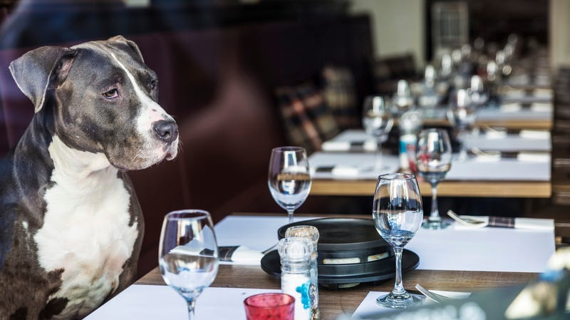 Illustration for article titled Hawaii may allow dogs in restaurants