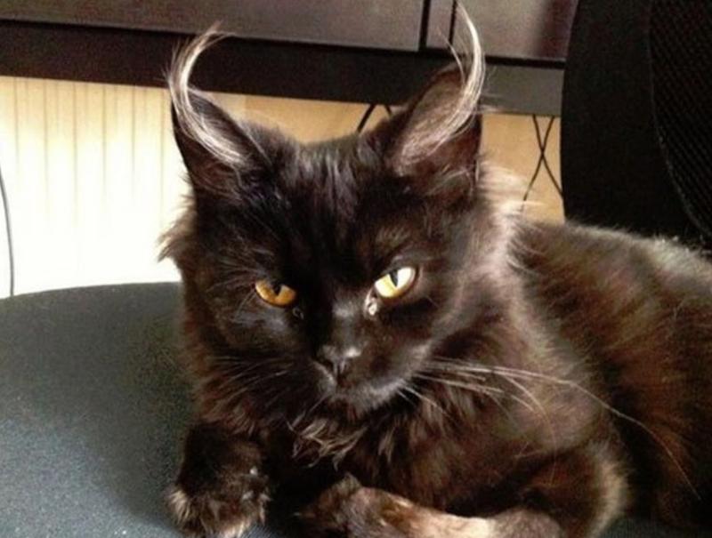 Black Cats Mythology