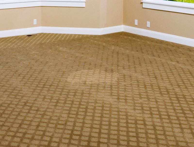 Illustration for article titled Spot Where Dog Vomit Cleaned Up Now Noticeably Cleaner Than Surrounding Floor