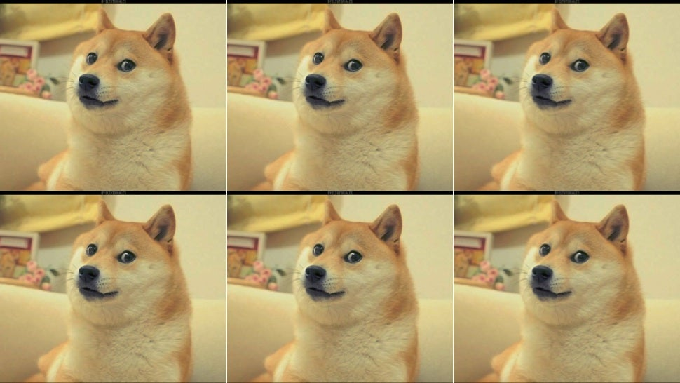 19crhbdp4sanejpg for the love of doge, please do not get a shiba inu