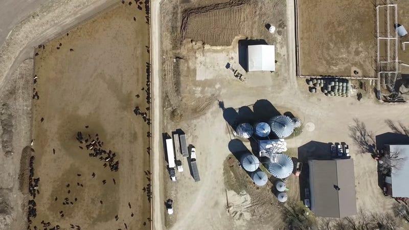 Illustration for article titled Este granjero calculó cuándo pasaría un satélite sobre su terreno y escribió un mensaje con sus vacas