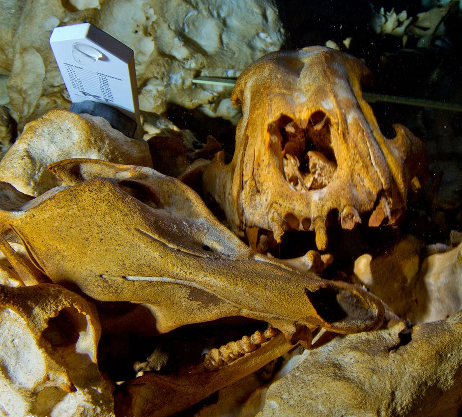 Treasure Trove of Ice Age Animal Remains Found in ...