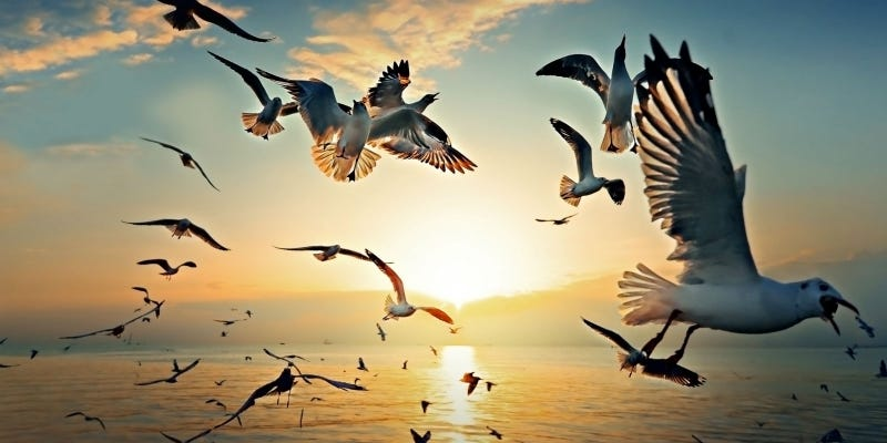 Ilration For Article Led Seagulls Will Not Up If They Eat Alka Seltzer