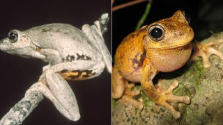 How And Why Animals Change Color With The Seasons