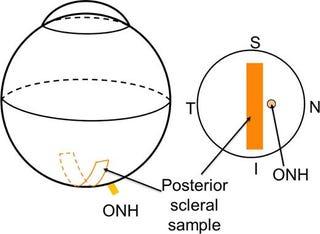 Illustration for article titled Palko's Medical Laboratory Procedures Pdf Free