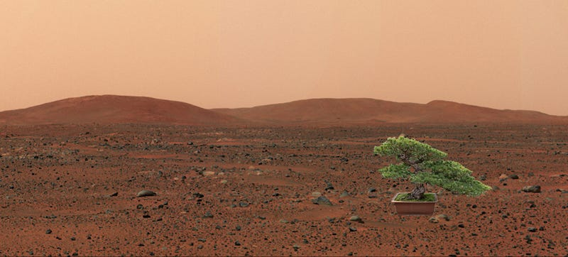 Illustration for article titled NASA Wants to Send Plant Life to Mars in 2020