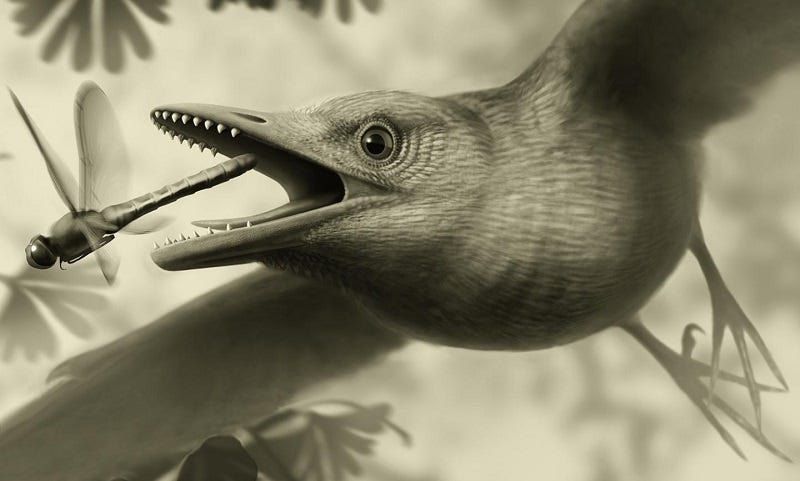 Illustration for article titled A 125-Million-Year-Old Fossil Indicates Birds Lived (And Flew) Like This